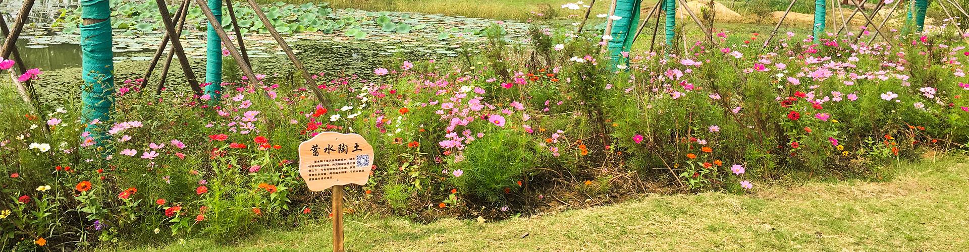 超强蓄水提高植物存活率